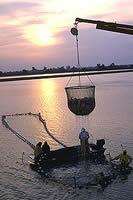 http://en.wikipedia.org/wiki/Aquaculture